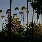 """Palm trees"""