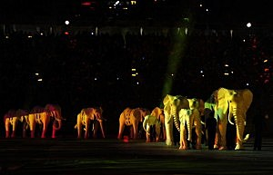 Elephants March In Albany