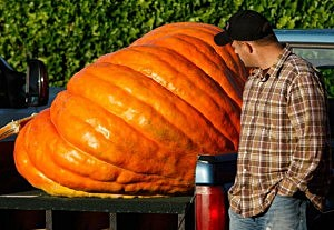 Largest Pumpkin
