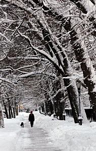 Winter Snowstorm Strikes U.S. East Coast