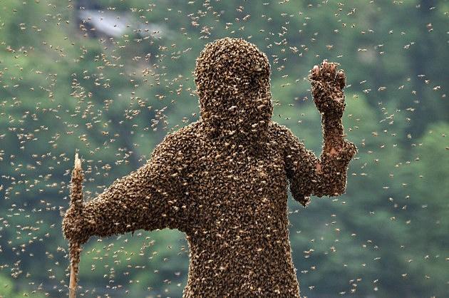 bee bearding contest in hunana