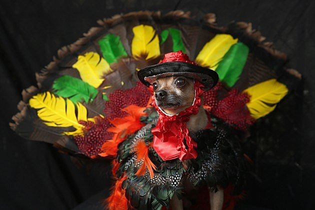 Dogs Dress Up For Annual Tompkins Square Park Halloween Parade