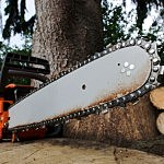 Chainsaw Tree Cut