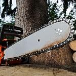 Chainsaw Tree Cut